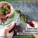 What Are the Potent Benefits of CBG FLOWER: Mother of All Cannabinoids?